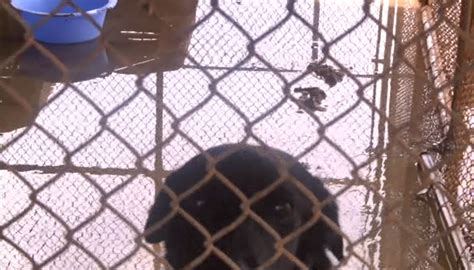 marion county pound kycir kentucky s animal shelters are falling and failing animals improvement