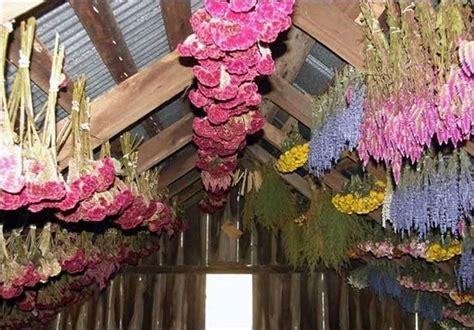 fiori da essiccare essiccare fiori fiori secchi
