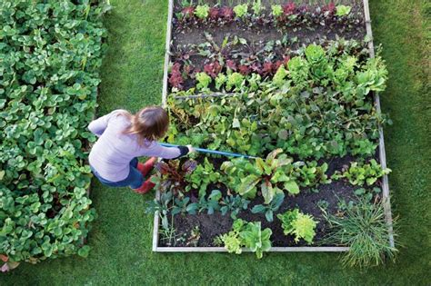 What To Plant In Vegetable Garden Now 15 Vegetables To Plant Now For A Fall Harvest The Plant