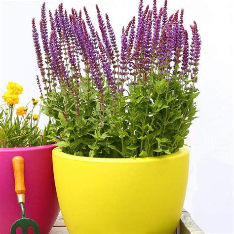 vasi per balcone fiori da balcone le specie pi 249 ed adatte ad essere