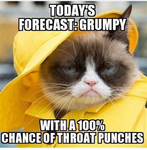 Grumpy Meme Face - 159 best images about grumpy cat on pinterest grumpy