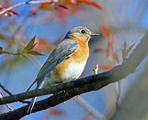 imagenes de animales que migran 191 por qu 233 migran las aves xornal escolar la regi 243 n