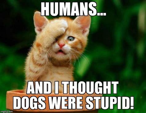 Fail Meme - cat fail imgflip