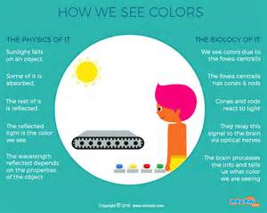 seeing colors how do we see color gifographic for mocomi