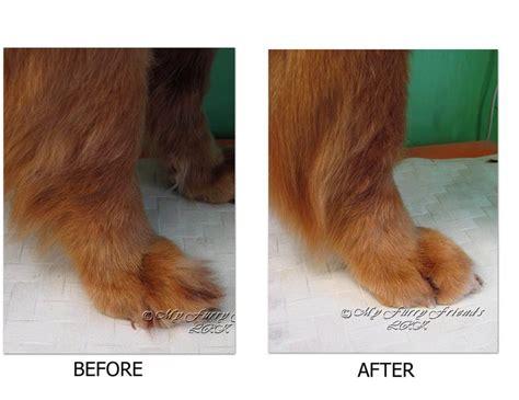 grooming tools for golden retrievers 25 best ideas about pet grooming on grooming tips grooming and