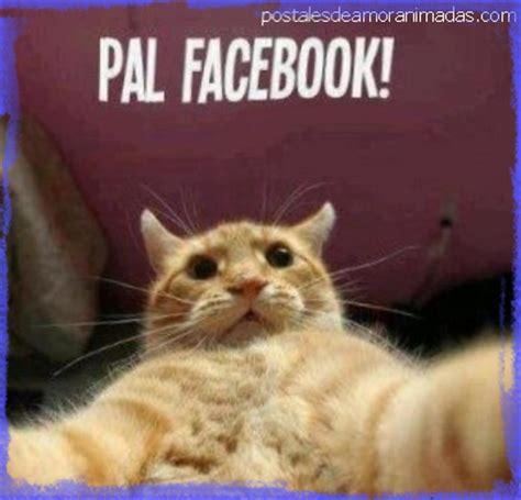 imágenes sorprendentes para compartir en facebook creativos chistes de risa para facebook que todos compartir 225 n