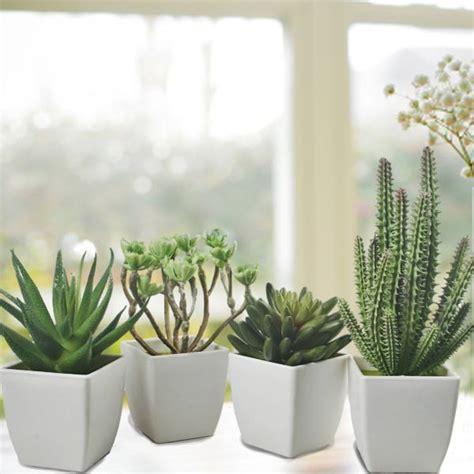 mini plants mini cactus plants