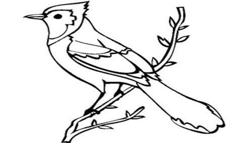Jay Bird Coloring Page   COLORING PAGE PEDIA