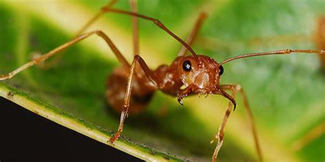 four queens las vegas bed bugs 26 images camas picture