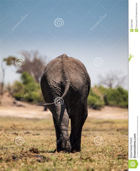 Architecture Business Cards elephant leaving royalty free stock photos image 35051928