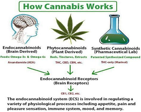 hemp cbd a primer on cannabinoids and cannabis medicine for better health books cannabinoids