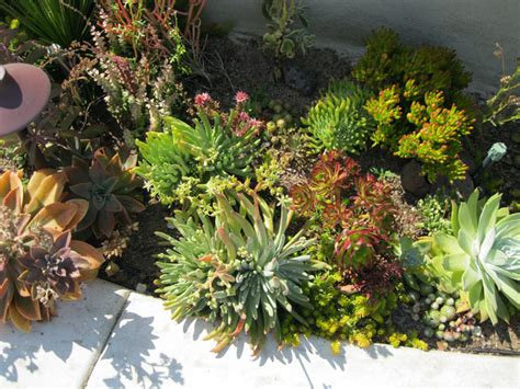 succulent front yard design california succulent front yard mediterranean