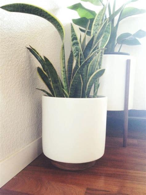 photo  ikea outdoor plant pots
