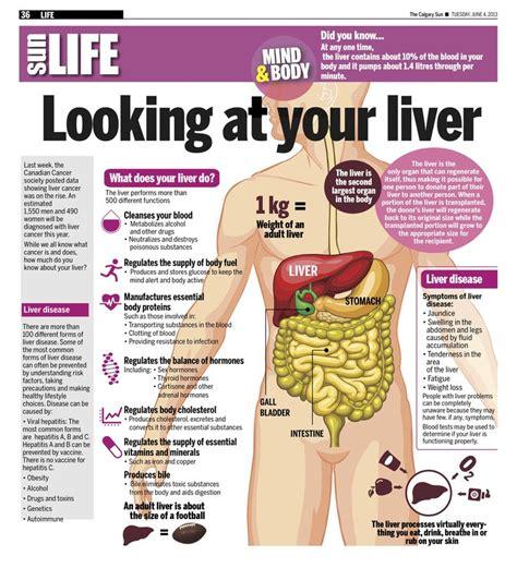 Shoulder Liver Detox by 25 Best Ideas About Liver Cancer On Liver
