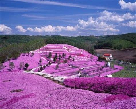 flower garden in japan the world s catalog of ideas