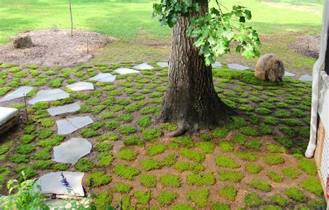 when is the best time to plant moss moss and stone gardens
