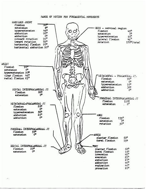 anatomy physiology coloring workbook anatomy and physiology coloring pages free coloring home