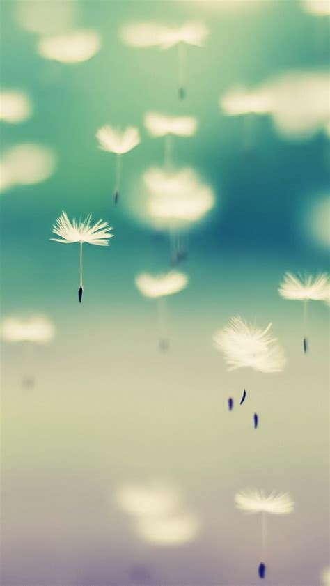 themes cute iphone 5 dandelion iphone 5 wallpaper iphone wallpapers iphone