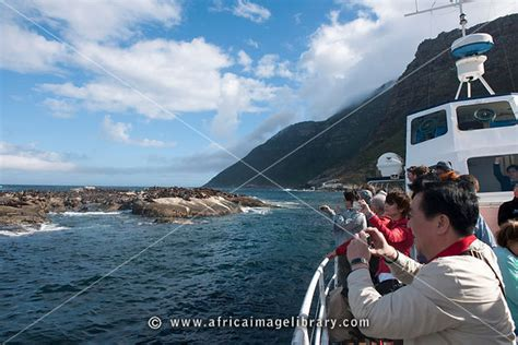 boat trip hout bay photos and pictures of seal island boat trip hout bay