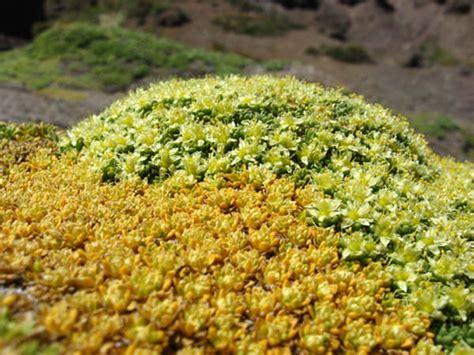 imagenes de flores de la zona norte zona norte de chile