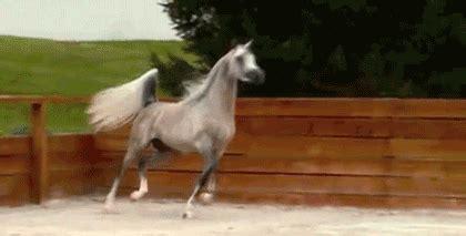 gif animated gifs 7chan arabian horse gif tumblr