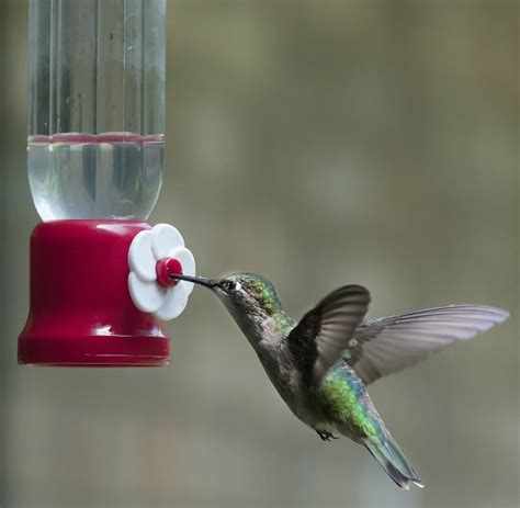 top 28 when should hummingbird feeders be put out