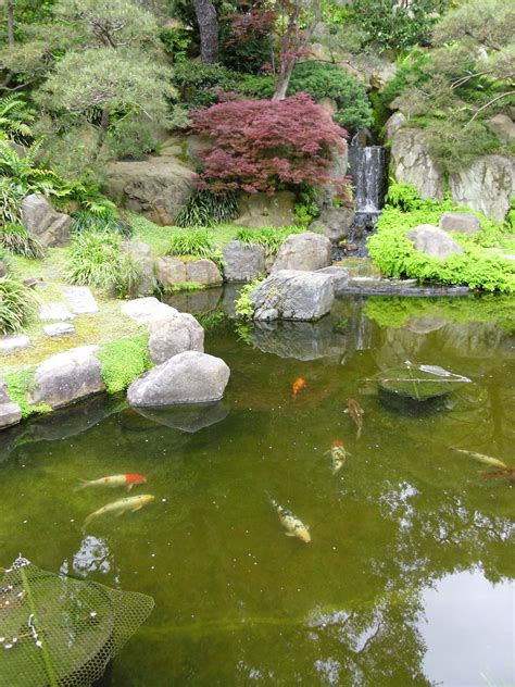 pond wallpapers high quality