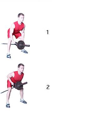spiermassa opbouwen en snel spieren kweken - Roeien Spieren Kweken
