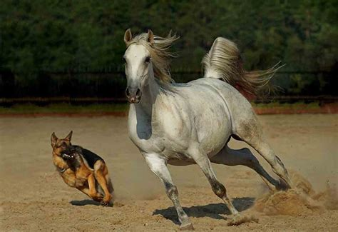 puppies and horses dogs and horses avoiding conflict tenerife news official website