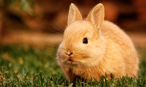 cute rabbit hd wallpaper cute rabbit hd wallpapers hd wallpapers high definition