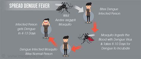 Dengue Hemorrhagic Fever Thesis by Essay Writing On Dengue Fever Persepolisthesis Web Fc2