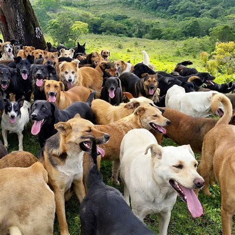 puppy land land of the strays in costa rica is heaven on earth for stray dogs bored panda