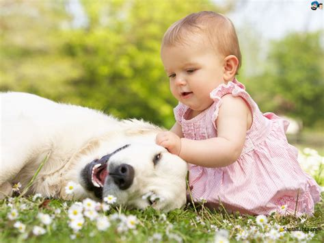 baby dogs baby wallpaper 153