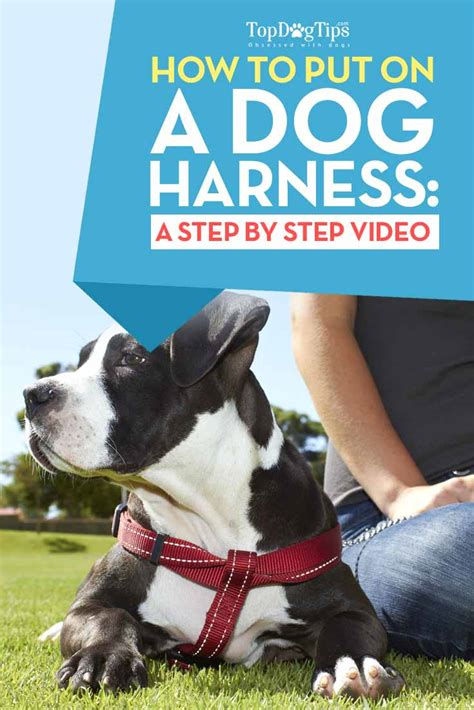 how to put a harness on a how to put on a harness 101 step by step with