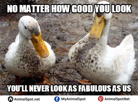 Duck Memes - 20 totally adorable duck memes you won t be able to resist sayingimages com