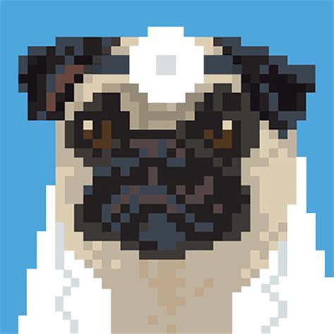 dr who pug doctor pug doctorpug