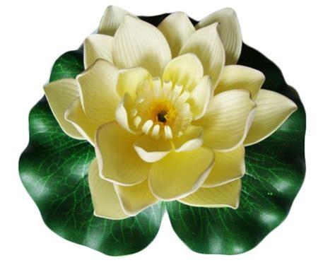 fiori galleggianti fiori galleggianti di ninfea