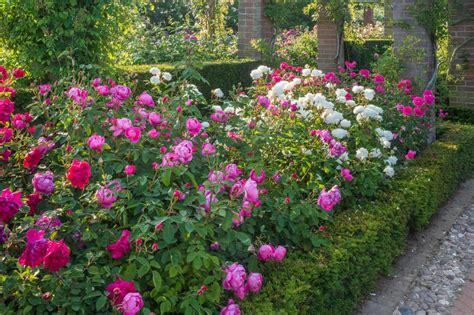 design  rose bed hgtv