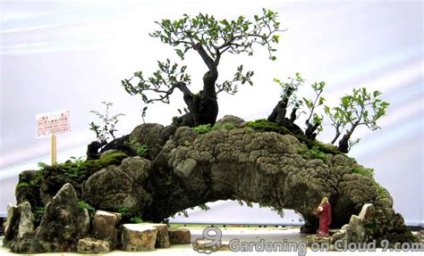 bonsai rock garden bonsai garden journal rocks for landscape penjing