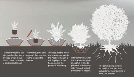 Cremation Tree Planter by Poetree The Innovative Urn Sevenponds Blogsevenponds