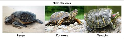 jenis macam gambar foto hewan reptil freewaremini