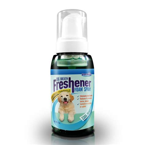 yorkie breath stinks 21 best images about minty fresh breath freshener on teeth cleaning