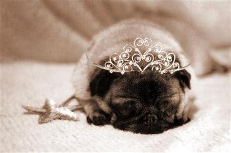 princess pug discover and save creative ideas
