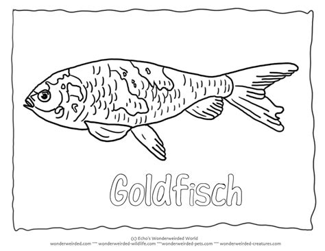 coloring pages rainbow trout rainbow trout pictures color kids coloring