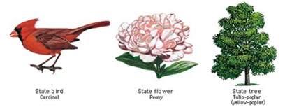 Louisiana State Bird And Flower - louisiana state bird flower and tree united states