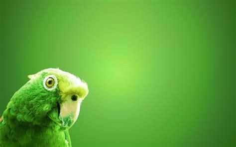 wallpaper green with birds beautiful parrot bird hd wallpaper 2 parrot wallpapers