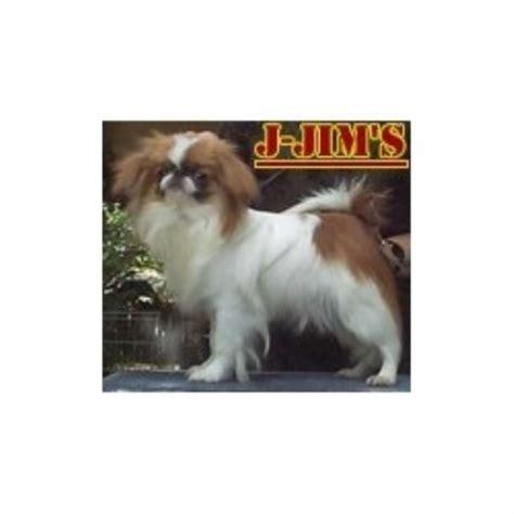 yorkie poo puppies for sale ta j jim s japanese chin japanese chin breeder in tulsa oklahoma