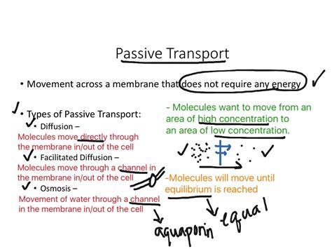 passive and active transport venn diagram venn diagram passive and active transport 28 images