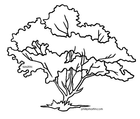 coloring pictures of flowers and trees dogwood tree flowers color outline clipart best