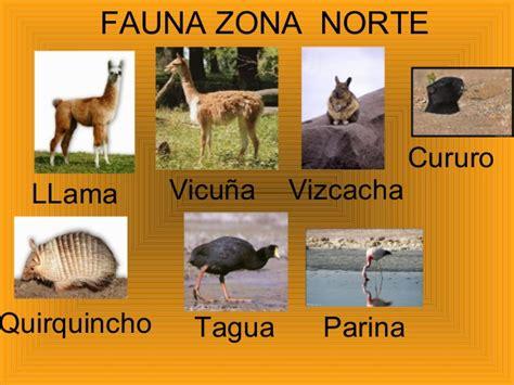 fauna de la zona sur chile en imagenes cual es la fauna de la zona norte grande de chile